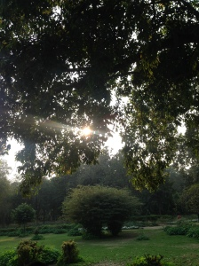 The gorgeous greenery at Lodhi Gardens